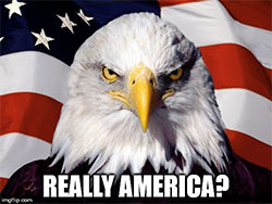 really_america_bald_eagle